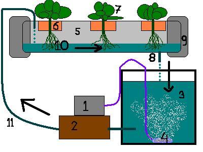 La hidroponia el cultivo sin necesidad de tierra for Imagenes de hidroponia